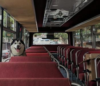 Пользователи поделились снимками животных, которые путешествуют почти как люди