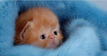 Прелесть неописуема: 33 котенка, которые растопят и очаруют любое сердце