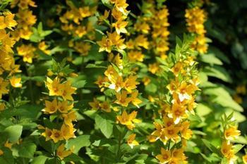 5 красивых растений для укрепления склонов