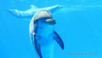 Моя встреча с дельфинами в море