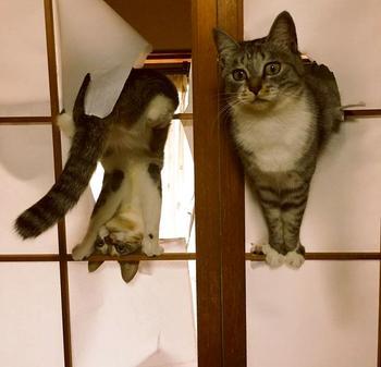 25 смешных кошек, чьи нелепые и странные выходки могут рассмешить до слёз