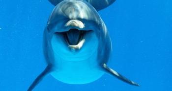 Вопрос на засыпку: есть ли среди дельфинов левши?