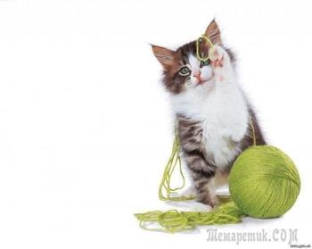 Вежливый котенок (Стих)
