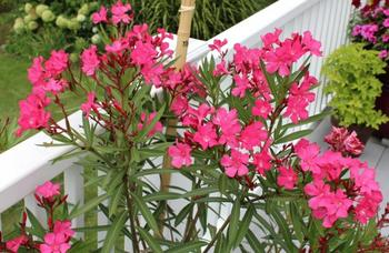 О чём следует помнить, если вы захотели привезти из отпуска растение?