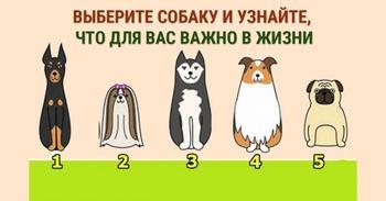 Выберите собаку и узнайте свои жизненные ценности