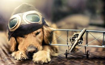 Удивительные портреты собак от Джессики Тринх