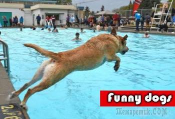 Смешные животные / Приколы с собаками #1
