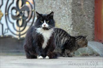 Коты в Калининграде. Нашествие