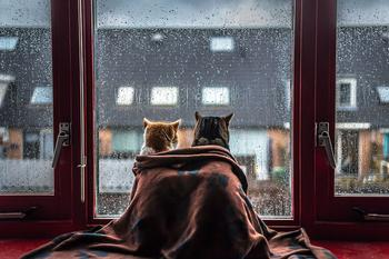 Кошки у окошка