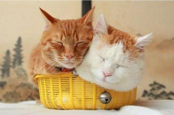 25 кошек, которые любят сидеть в самых не подходящих для этого местах