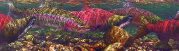 Марк Сузино и его рыбий мир сказочно красивый