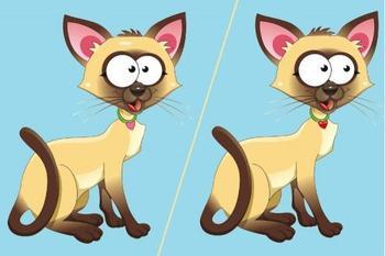 Проверим внимательность? Сможете найти между котятами 4 отличия?