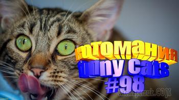 Смешные коты   Приколы с котами   Видео про котов   Котомания #98