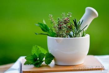Популярные растения в медицине: лечить нельзя исключить