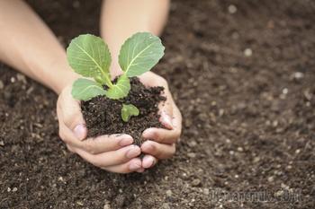 Секреты Огорода: какую почву любят растения