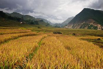 Прогулки по рисовым террасам