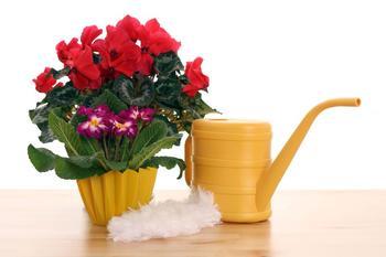 Чем подкормить домашние цветы в домашних условиях?