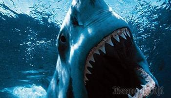 10 самых опасных акул, убивающих людей