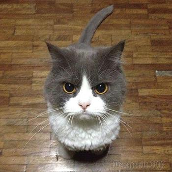 25 коварных кошек, задумавших тайно убить своих владельцев