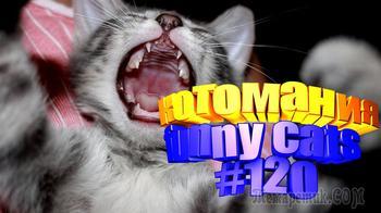 Смешные коты | Приколы с котами | Видео про котов | Котомания #120