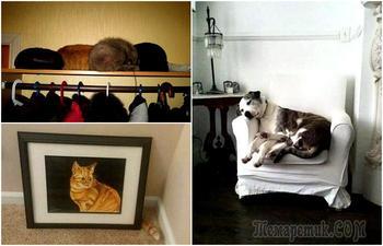 17 фотографий, доказывающих, что коты - мастера маскировки