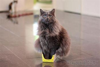 Железная кошачья логика и 20 её примеров