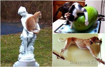 Проделки животных, которые остались одни дома: курьезные фото