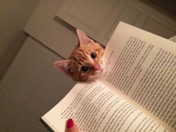 Кошки, которые хотят, чтобы вы прекратили читать