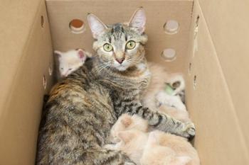 Эта кошка взяла под опеку 14 котят