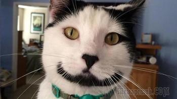 Художества природы: 33 фото котов с необычным окрасом