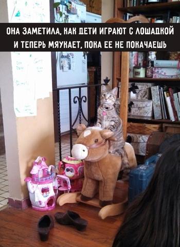 Коты такие коты! 15 пушистых, которые ведут себя смешно и, в то же время, очень странно