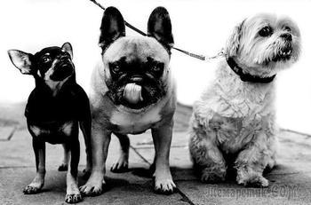 Фотограф снимает портреты собак со всего мира