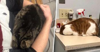 Забавные примеры того, как коты прячутся от ветеринаров
