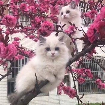 19 котиков, которым надоело ходить по земле, они залезли на дерево и прикинулись птицами