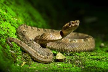В саду спряталась большая змея, а вы сможете ее найти?