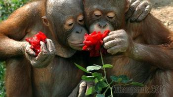 Милейшие фото животных, очень любящих цветы