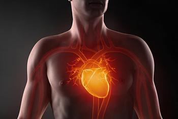 Сколько лет вашему сердцу