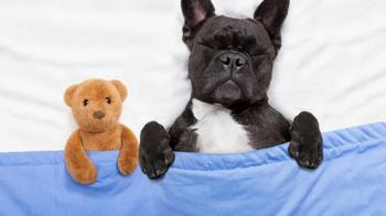 Что ваша собака видит во сне