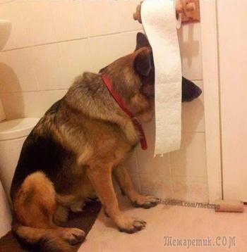 Собаки, которые совершенно не умеют играть в прятки