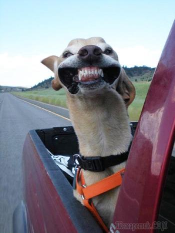 Только ветер, только счастье впереди: собаки, которым в лицо бьет ветер