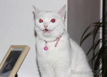 20 фотографий доказывающих, что коты на самом деле одержимы демонами