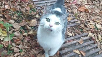 Брошенный кот бежал за машиной девушки и умолял забрать его с собой