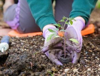 Что принёс россиянам новый закон о садах и огородах, принятый в этом году?