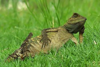 Забавные сцены из жизни рептилий в фотографиях Яна Хидаята
