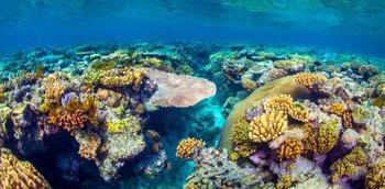 Подводная одиссея: Большой Барьерный риф