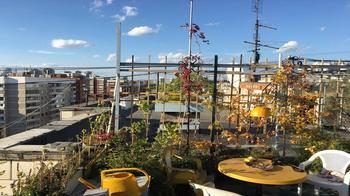 Пенсионер 18 лет превращал крышу многоэтажки в цветущий сад. «Коммунальщики» разрушили его за одно утро