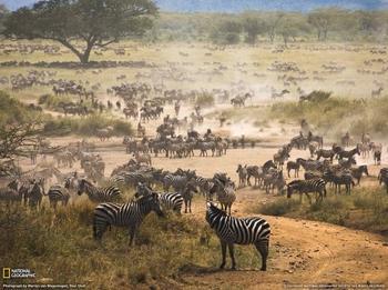10 Интересных национальных парков Африки