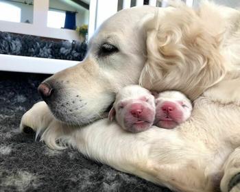 Гордые собаки-мамочки со своими щенками, глядя на которых сердце тает само собой