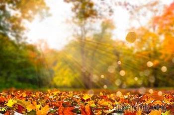 Счастливые листья