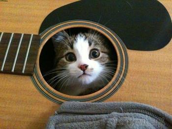 18 необычных котов, которые предпочитают необычные места обитания